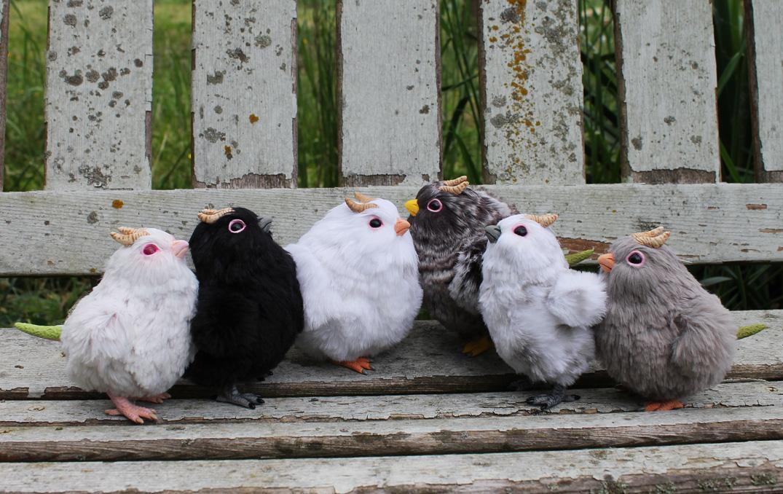 chickgroup.jpg