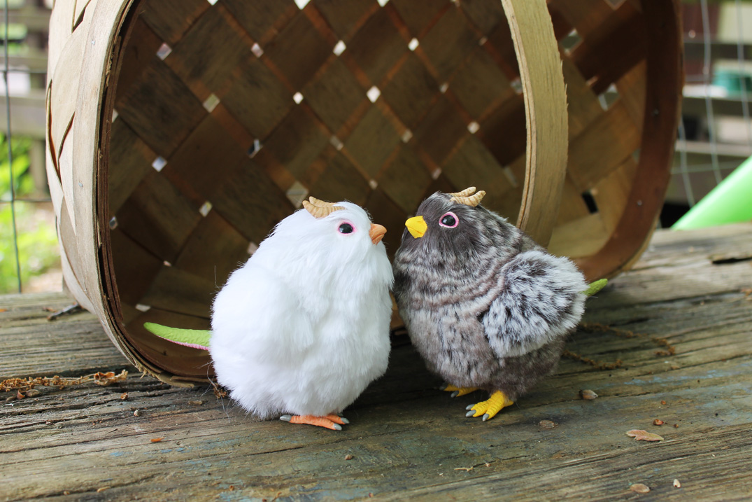 Cloud White and Wild Brown Chick