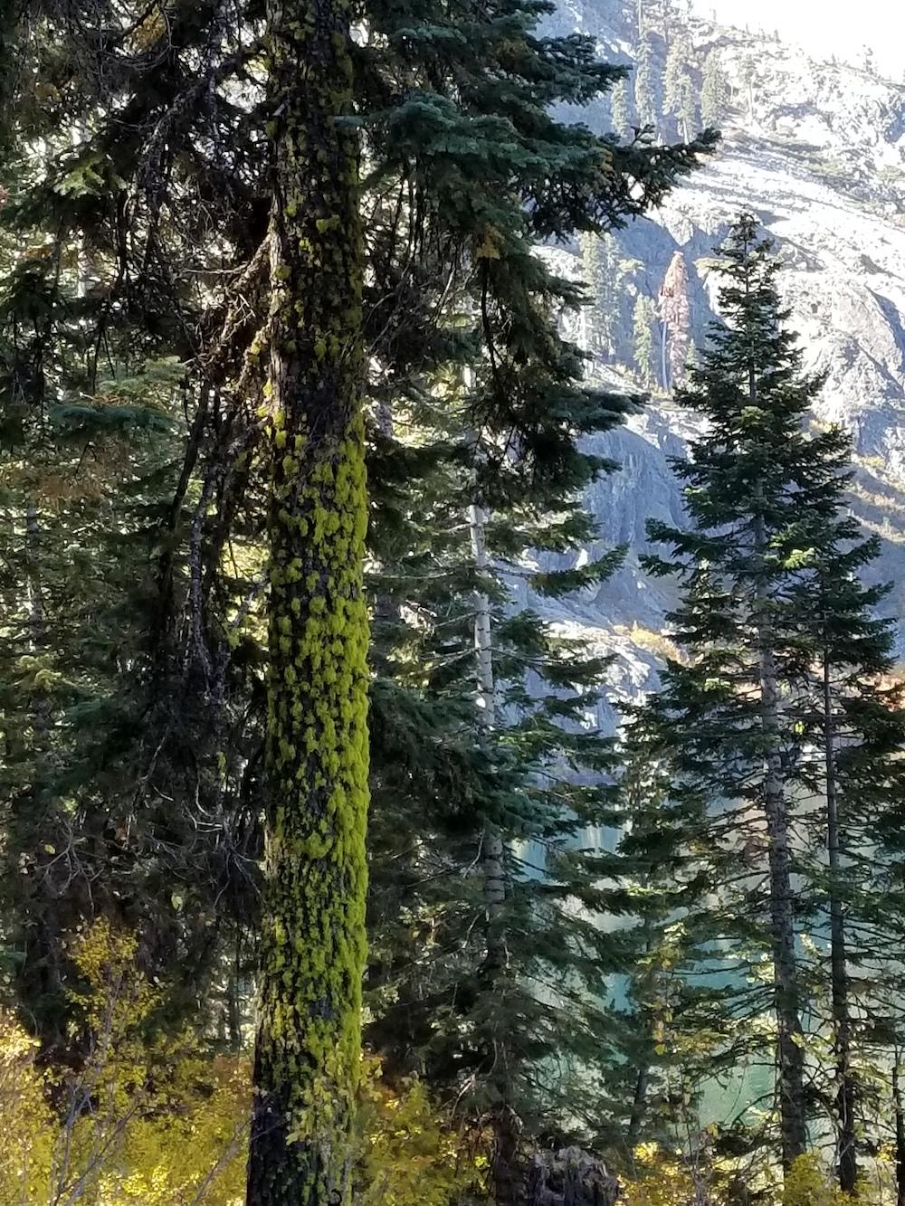 TRAILclothleather.com_Mount-Shasta-Color-Story20171007_111131 copy.jpg