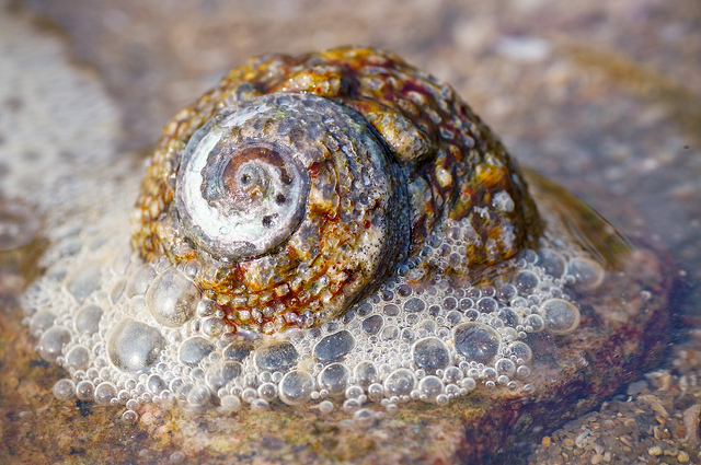 Sea Snail and Bubbles, both demonstrate fractals