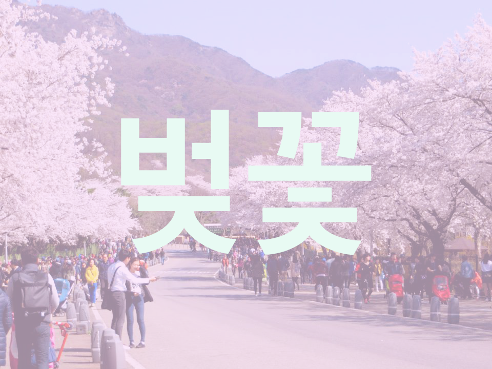 "Cherry Blossom in Korean is ""벚꽃"" (pŏt-kkot), which I love because even the writing looks like little blossoms!"