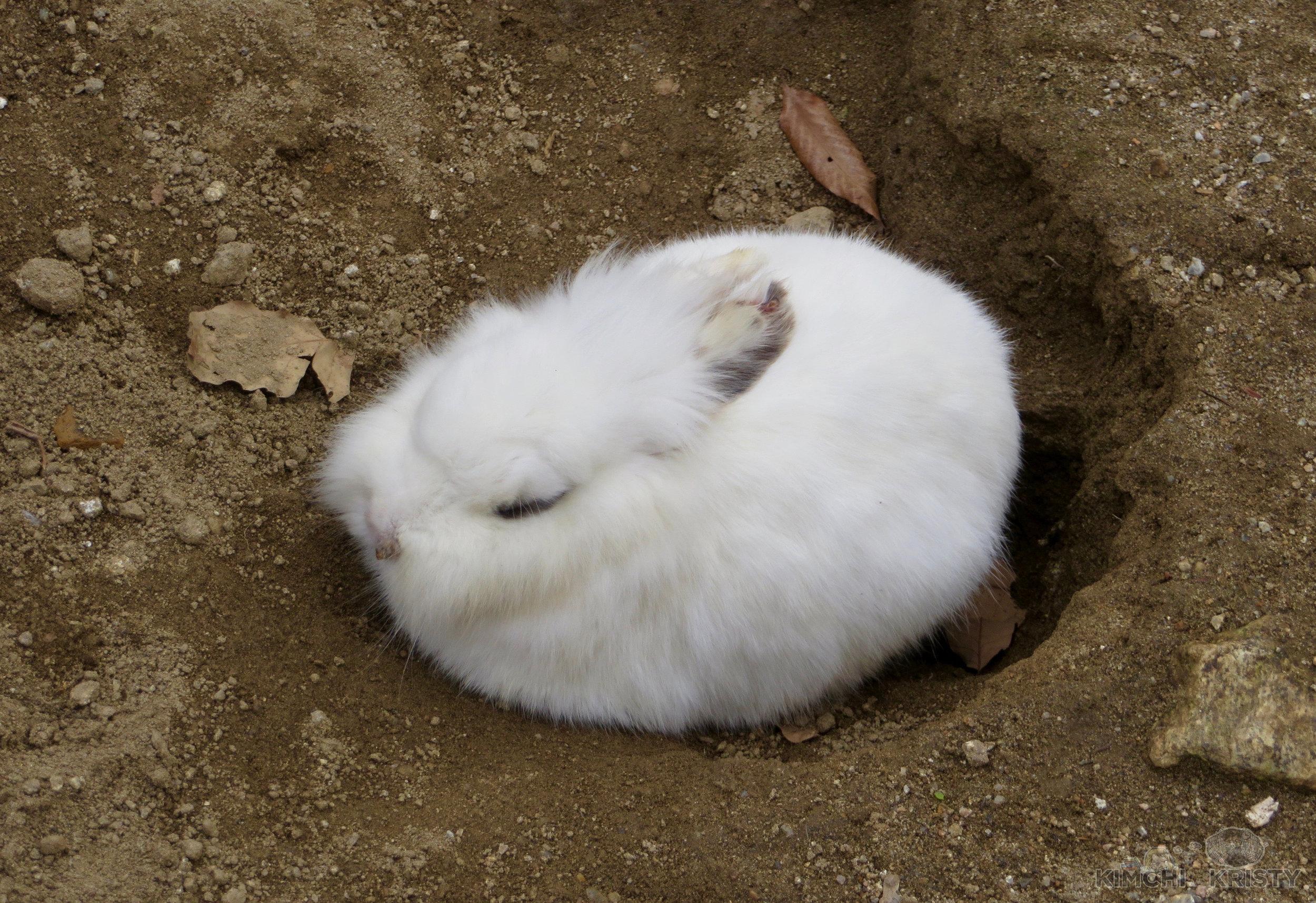 bunny2.1.jpg