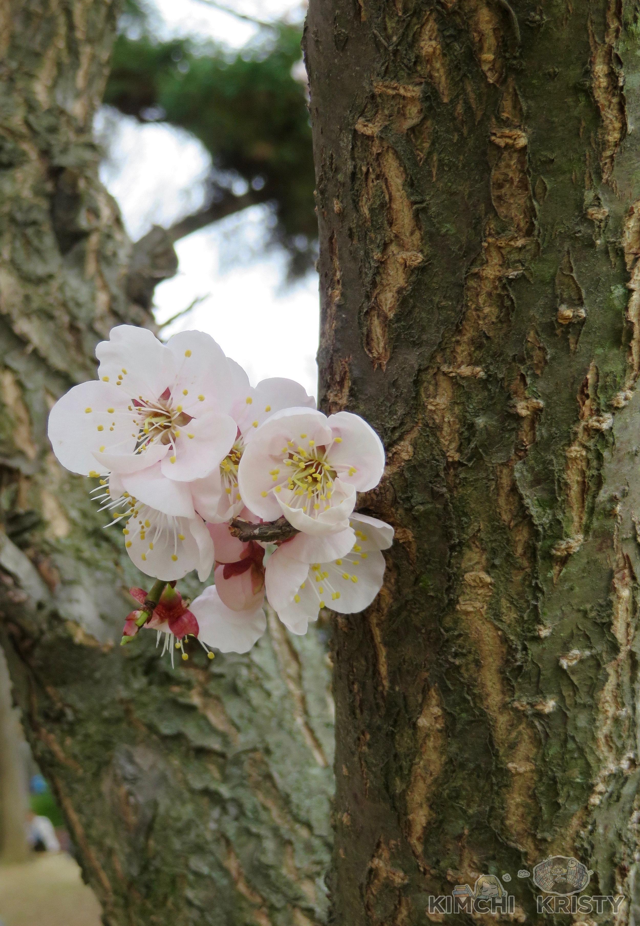 blossomssmall.jpg