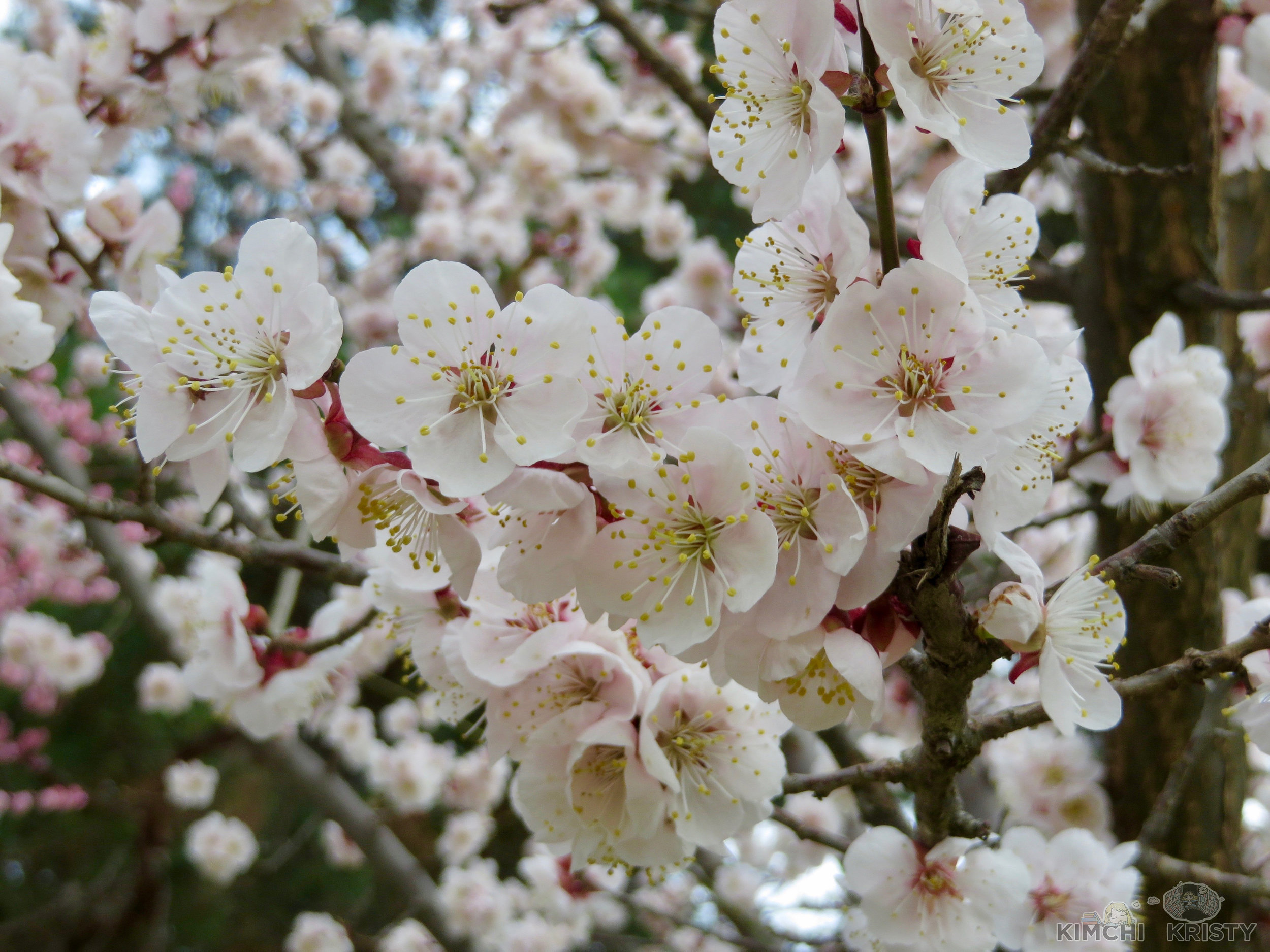 blossoms8.jpg