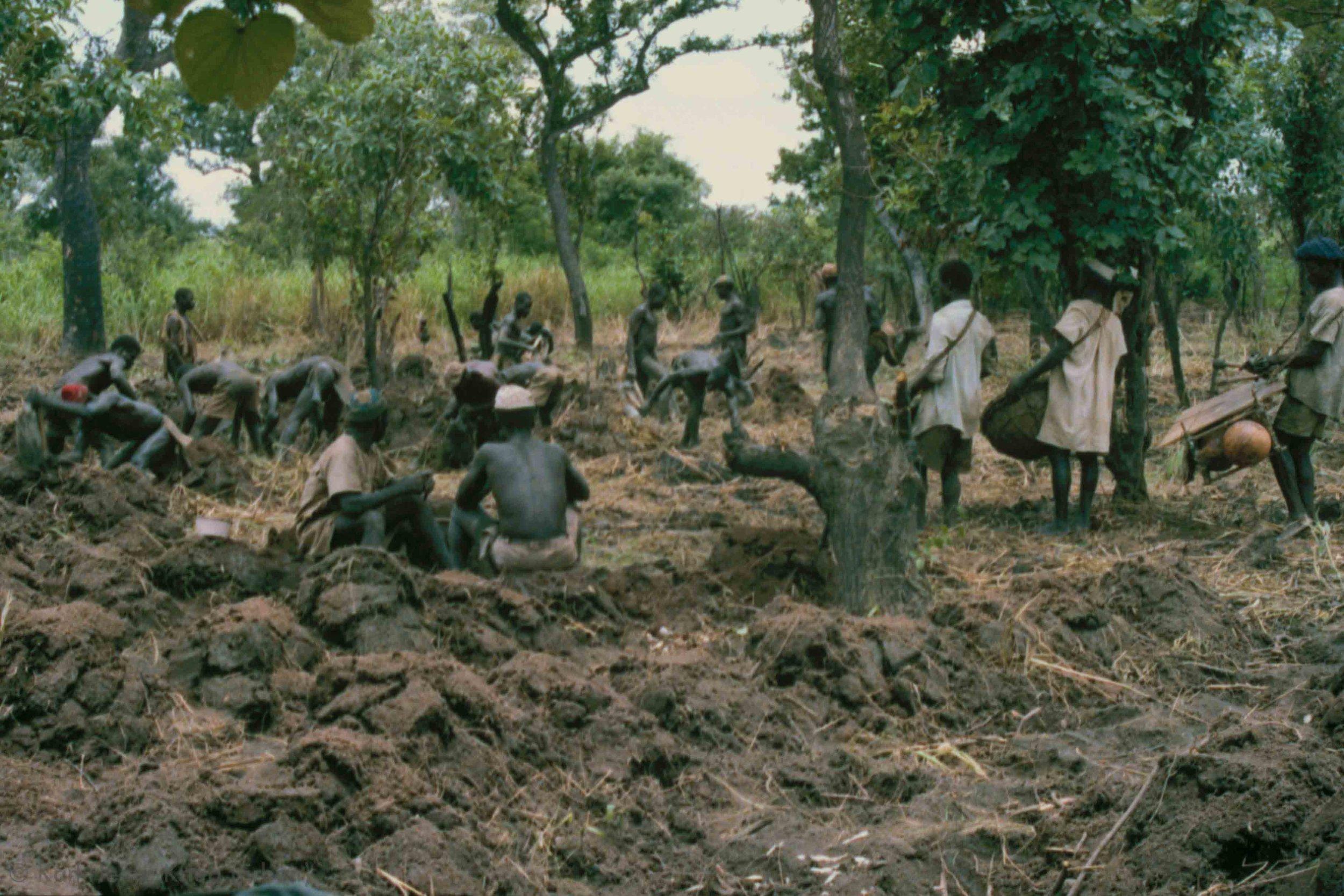 Feldbau-Wettbewerb mit einer Musikgruppe. Foto: Karl-Heinz Krieg, Kounoumon (Region von Boundiali, Côte d'Ivoire), 1980