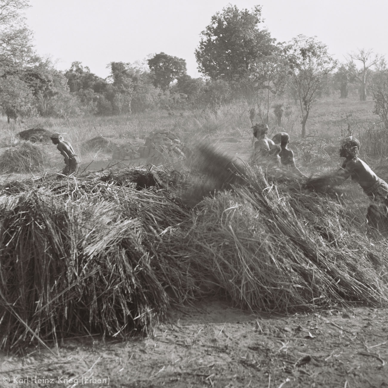 Töpfe werden zum Brennen mit Gras bedeckt. Foto: Karl-Heinz Krieg, Gbon (Region von Boundiali, Côte d'Ivoire), 1977