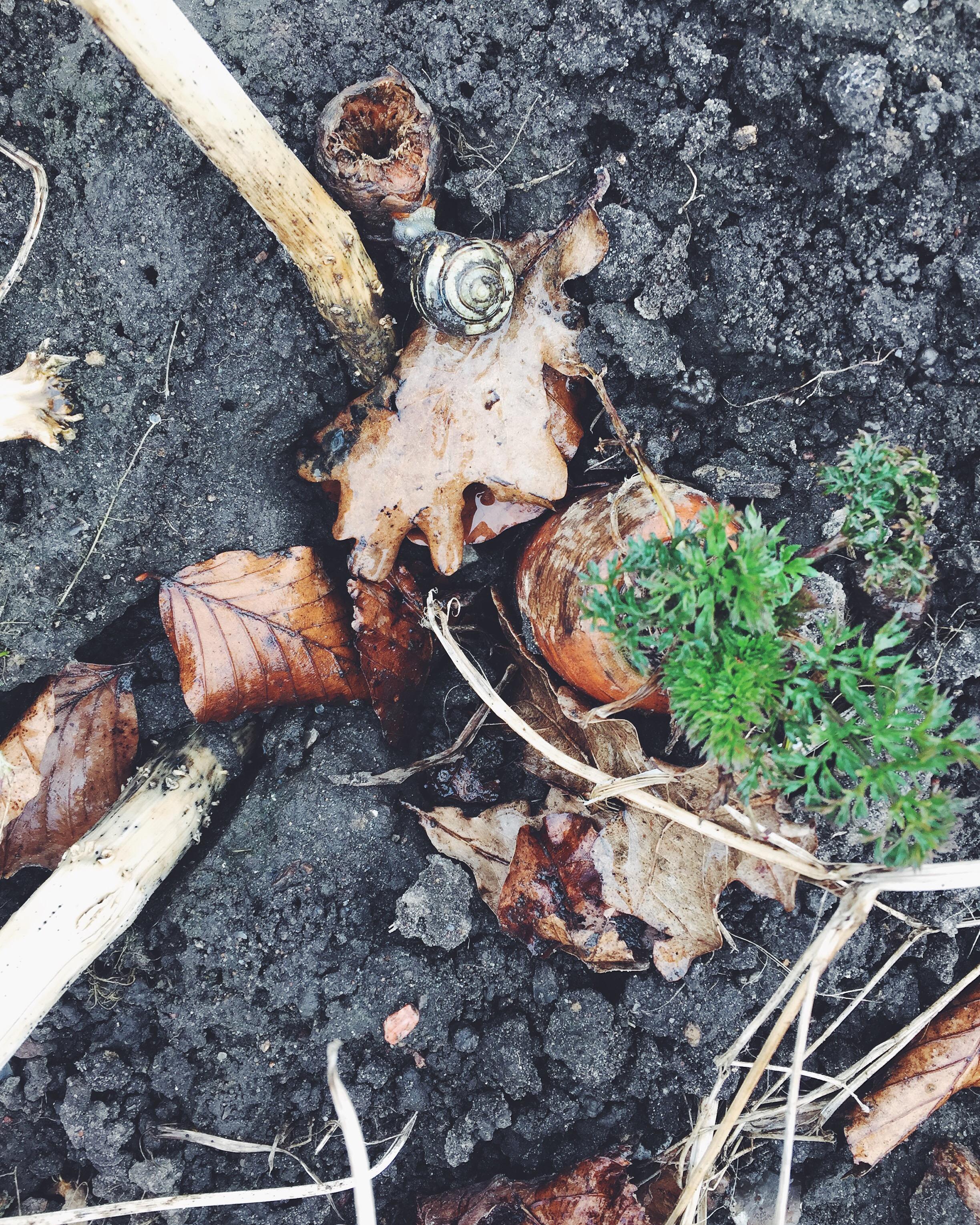 Biodynamik - Den levende jord
