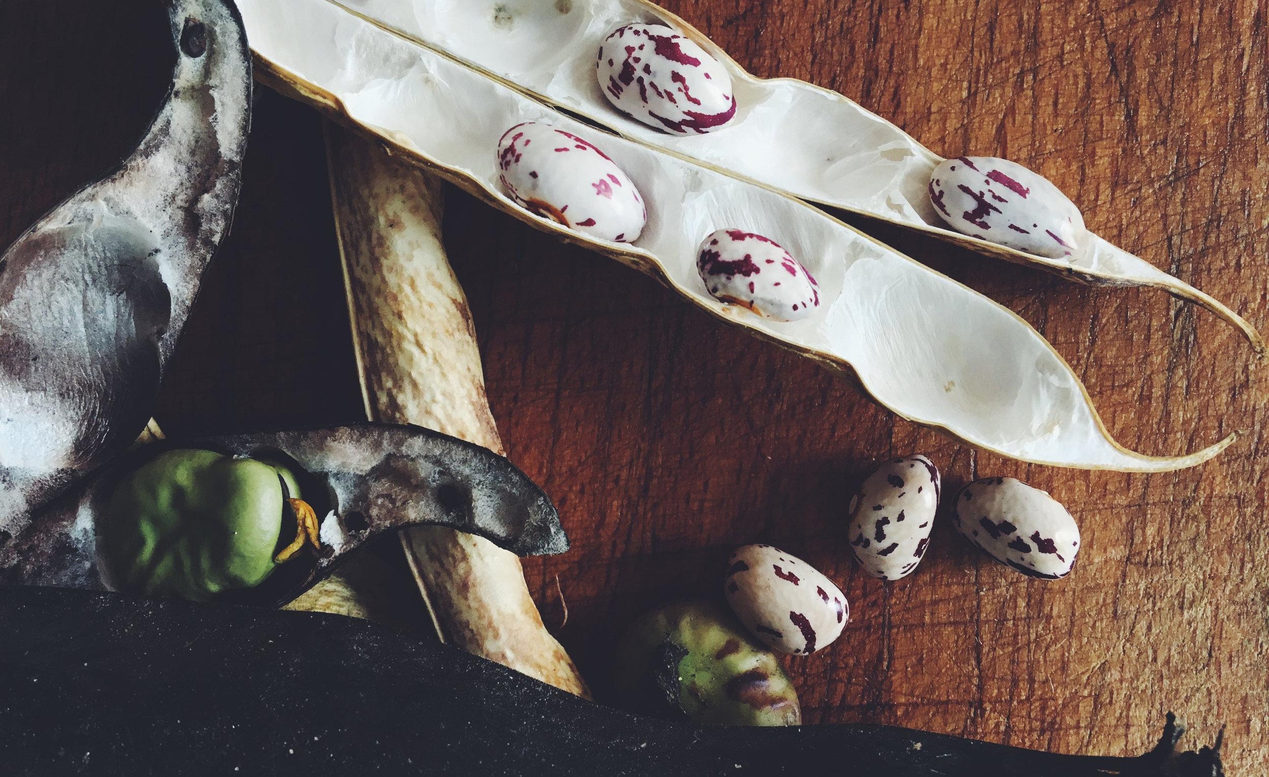 The art of seedsaving - With Signe Voltelen - Cph Seeds