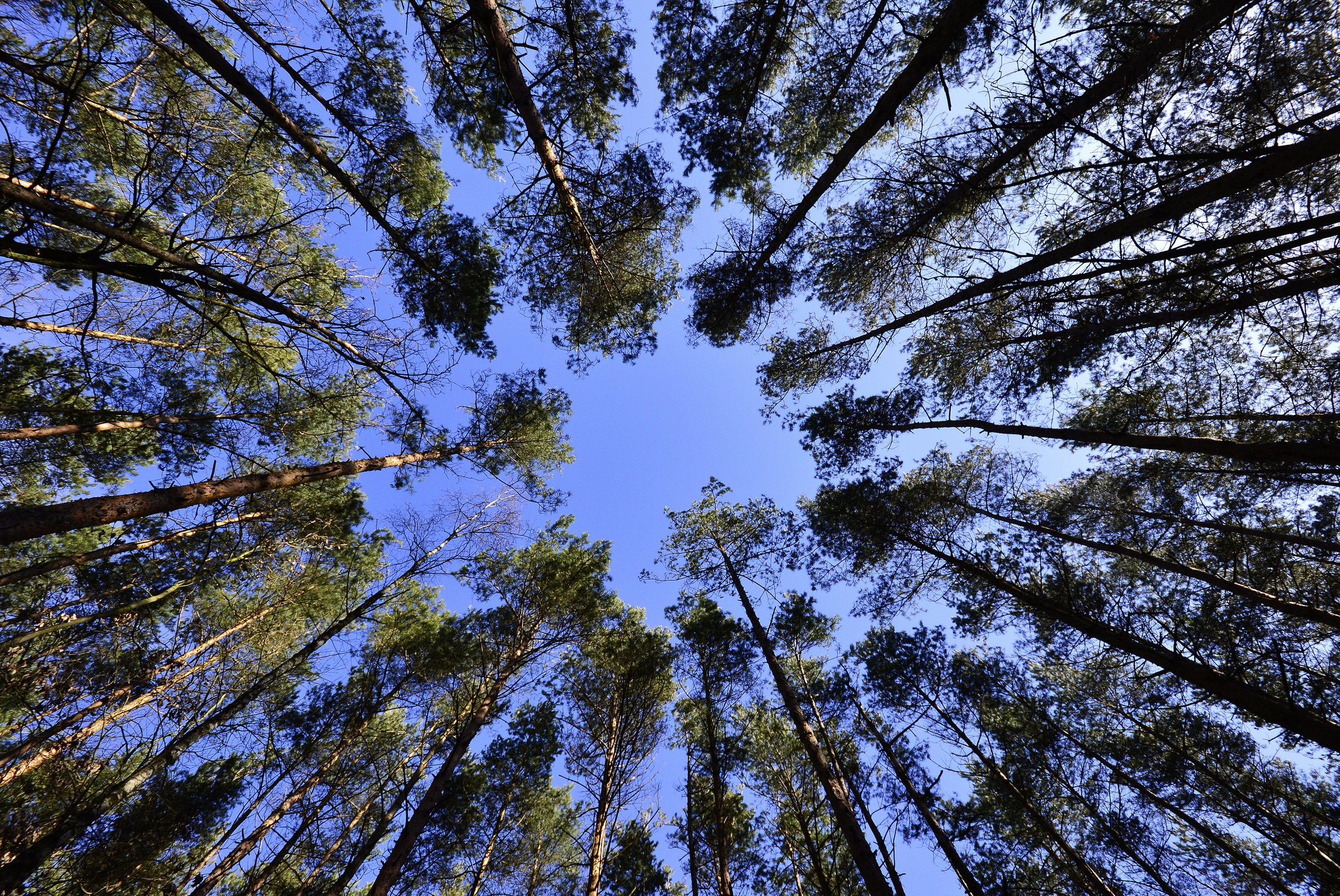 forests-sky-foliage-from-the-bottom-of-the-62301.jpeg