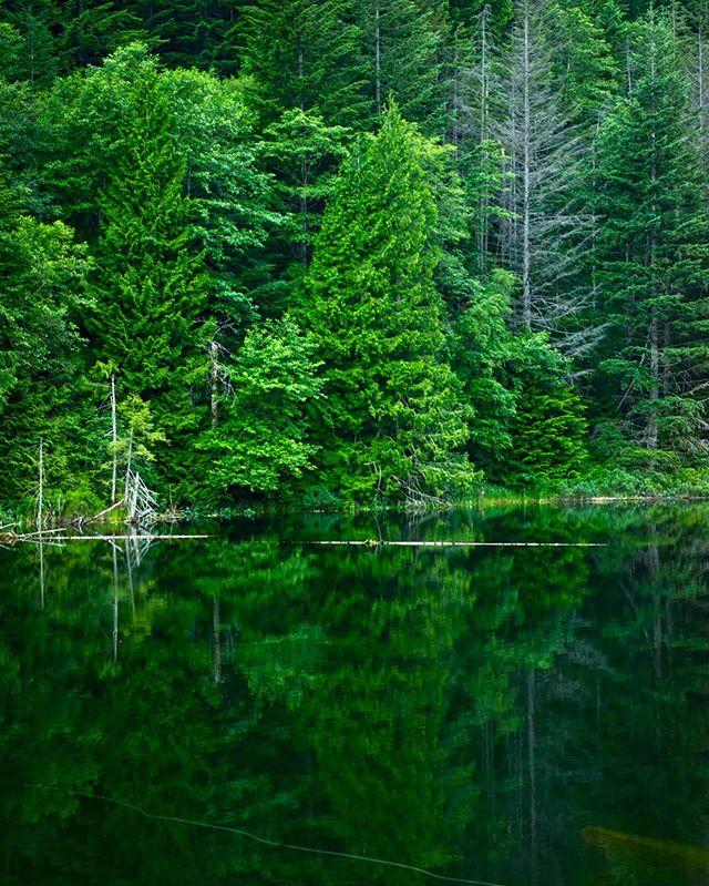 🌲💠🌲 - Still waters run deep -