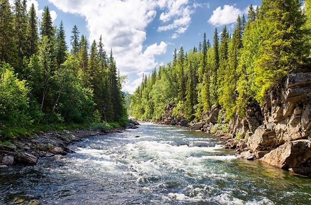 🌲🏞🌲 -  There is another alphabet, whispering from every leaf, singing from every river, shimmering from every sky. ~Dejan Stojanovic -