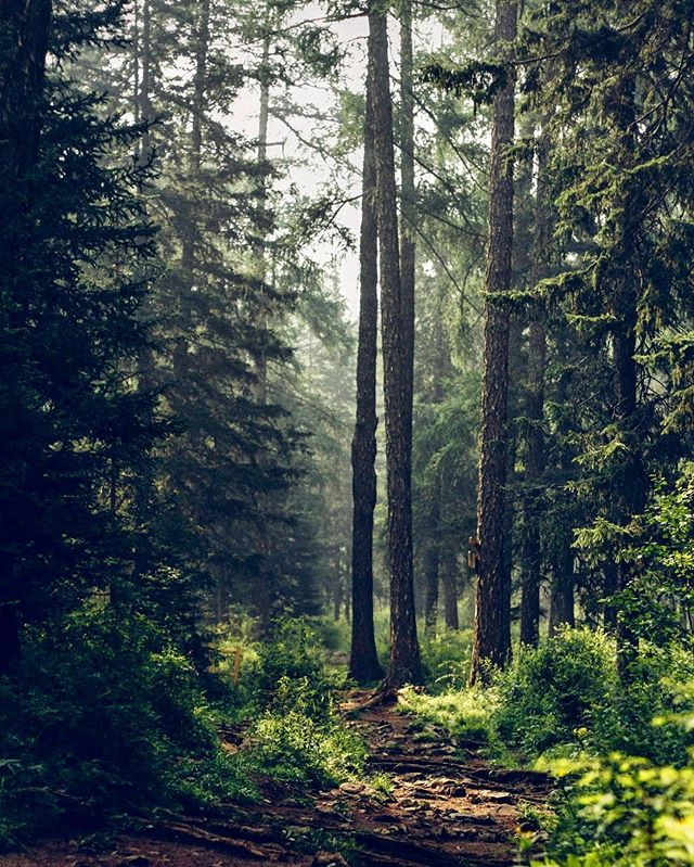 🌲🌳🌲 -  Votes are like trees, if you are trying to build a forest. If you have more trees than you have forests, then at that point the pollsters will probably say you will win. ~Dan Quayle -