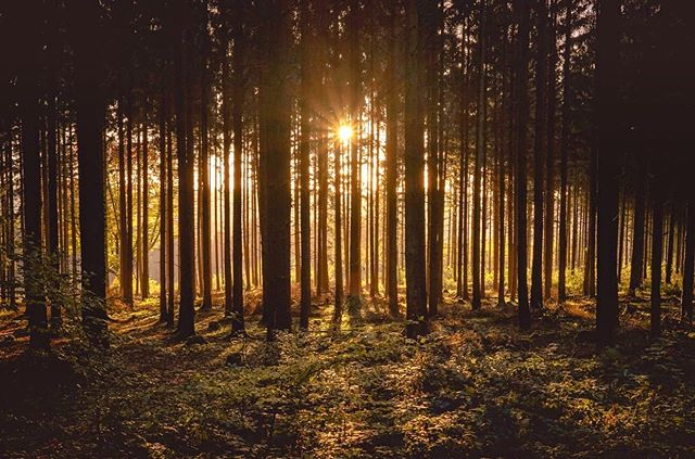 🌲🌞🌲 - Any patch of sunlight in a wood will show you something about the sun which you could never get from reading books on astronomy. These pure and spontaneous pleasures are 'patches of Godlight' in the woods of our experience. ~C.S. Lewis -