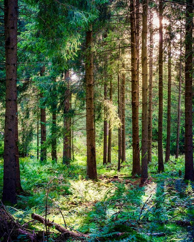 🌲🌿🌲 - These woods are where silence has come to lick its wounds. ~Samantha Hunt -
