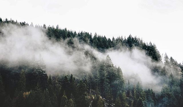 🌲🌫🌲 - Mist around a mountain: all reality is there. ~Marty Rubin -