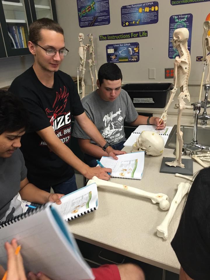 Students examine replica skeletal models for anatomy classes.