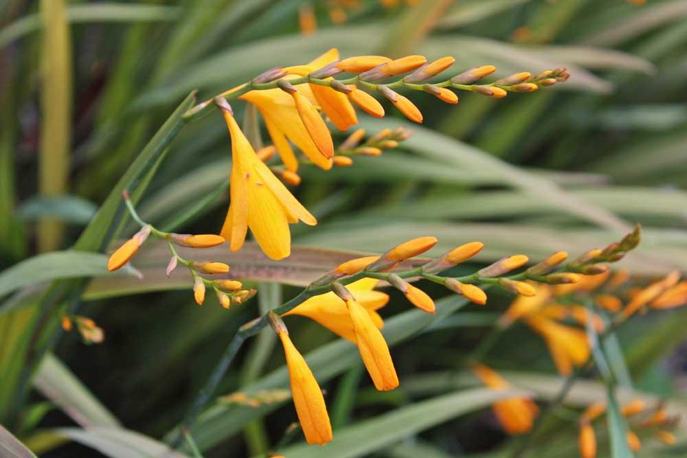 Cat Datta - flowers