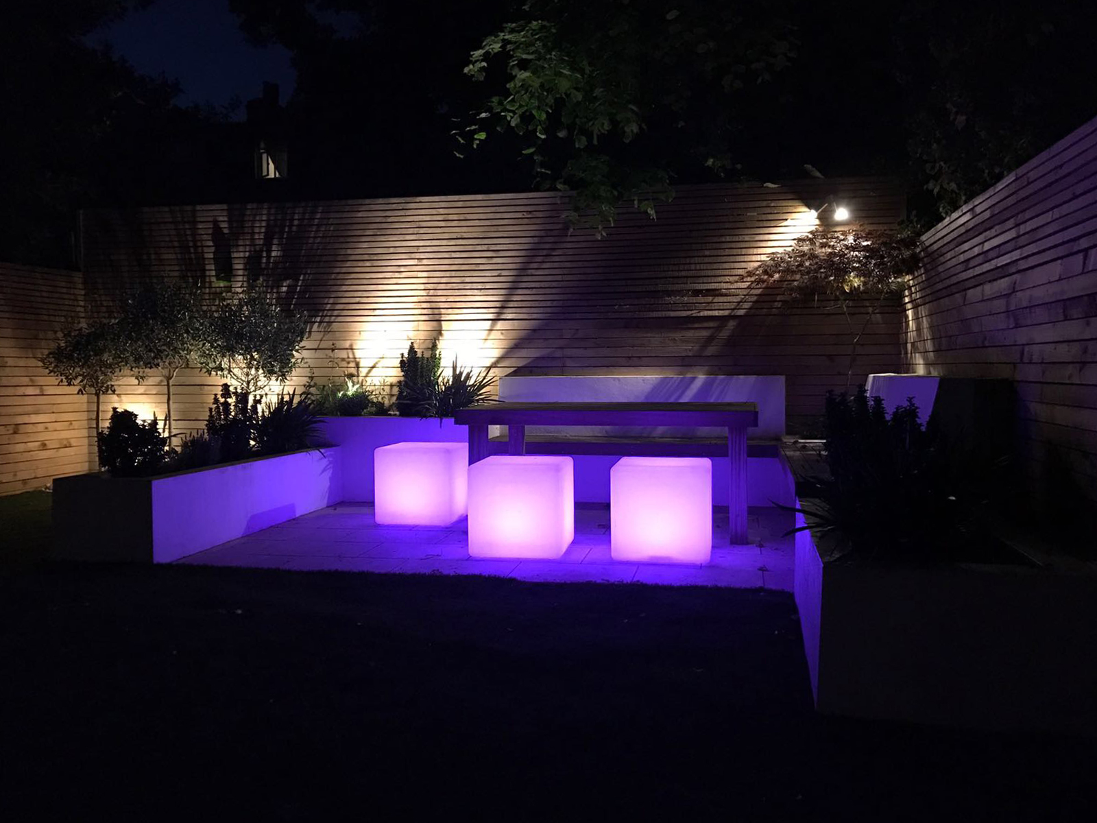 Cat Datta - pink lighting