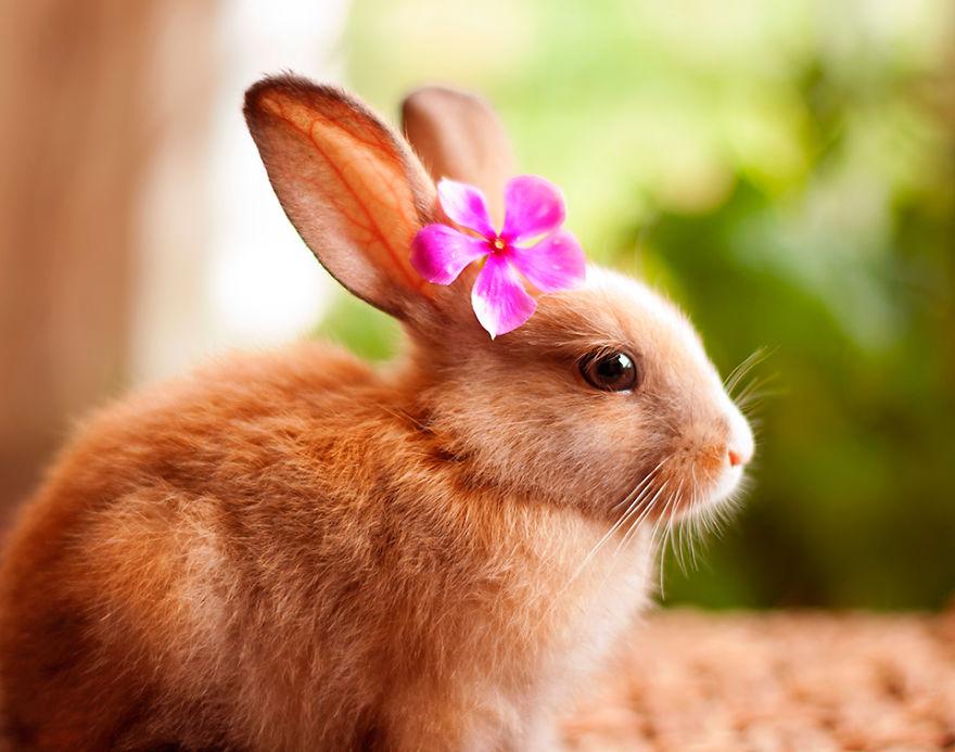 My-bunnies-are-my-models2__880.jpg