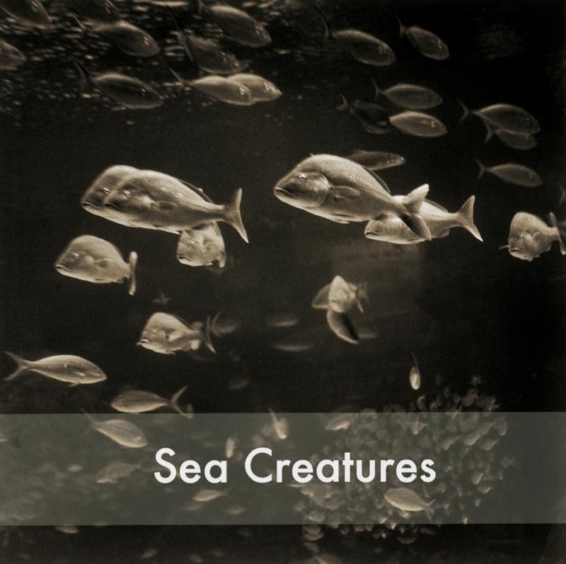Reef_Fish_1__30X30-1.jpg