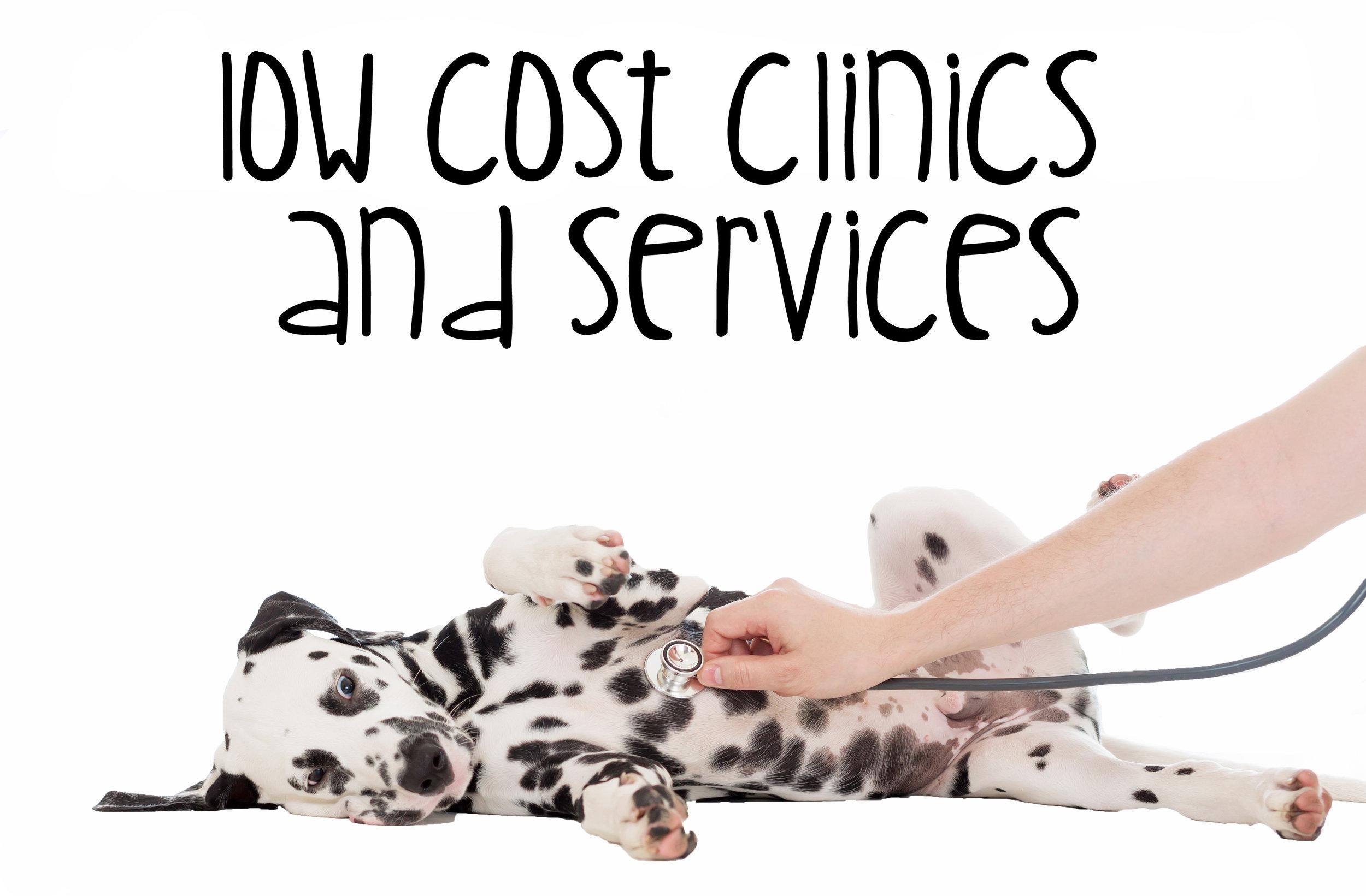 Low Cost Vaccines1.jpg