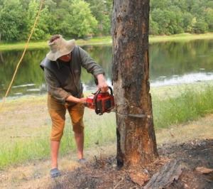 treecutting.jpg
