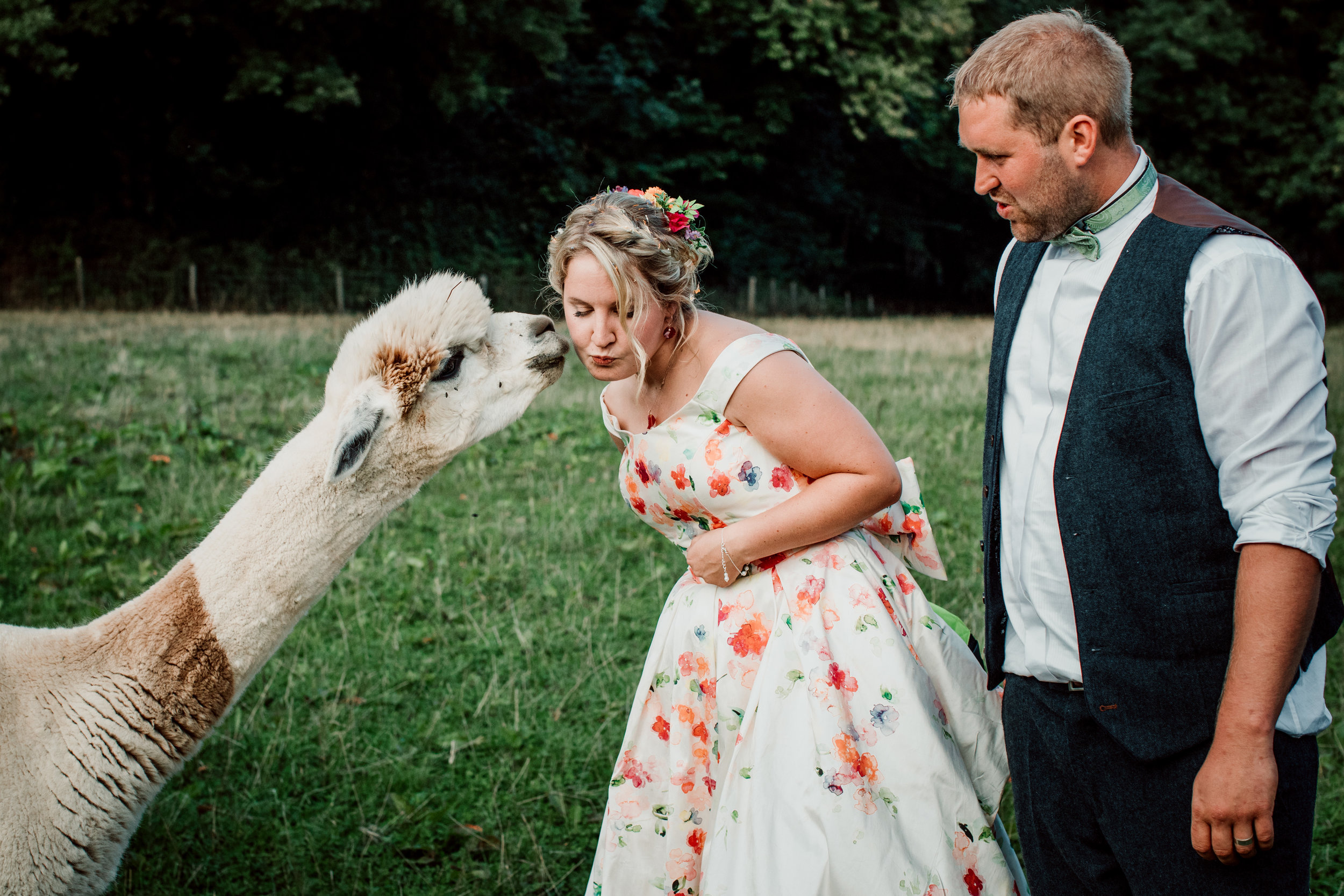 JON_HARPER_COTSWOLD_WEDDING_PHOTOGRAPHY_LITTLE_ORCHARD_ALPACAS_447_OF_568.JPG