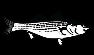 fish_logo (1).png