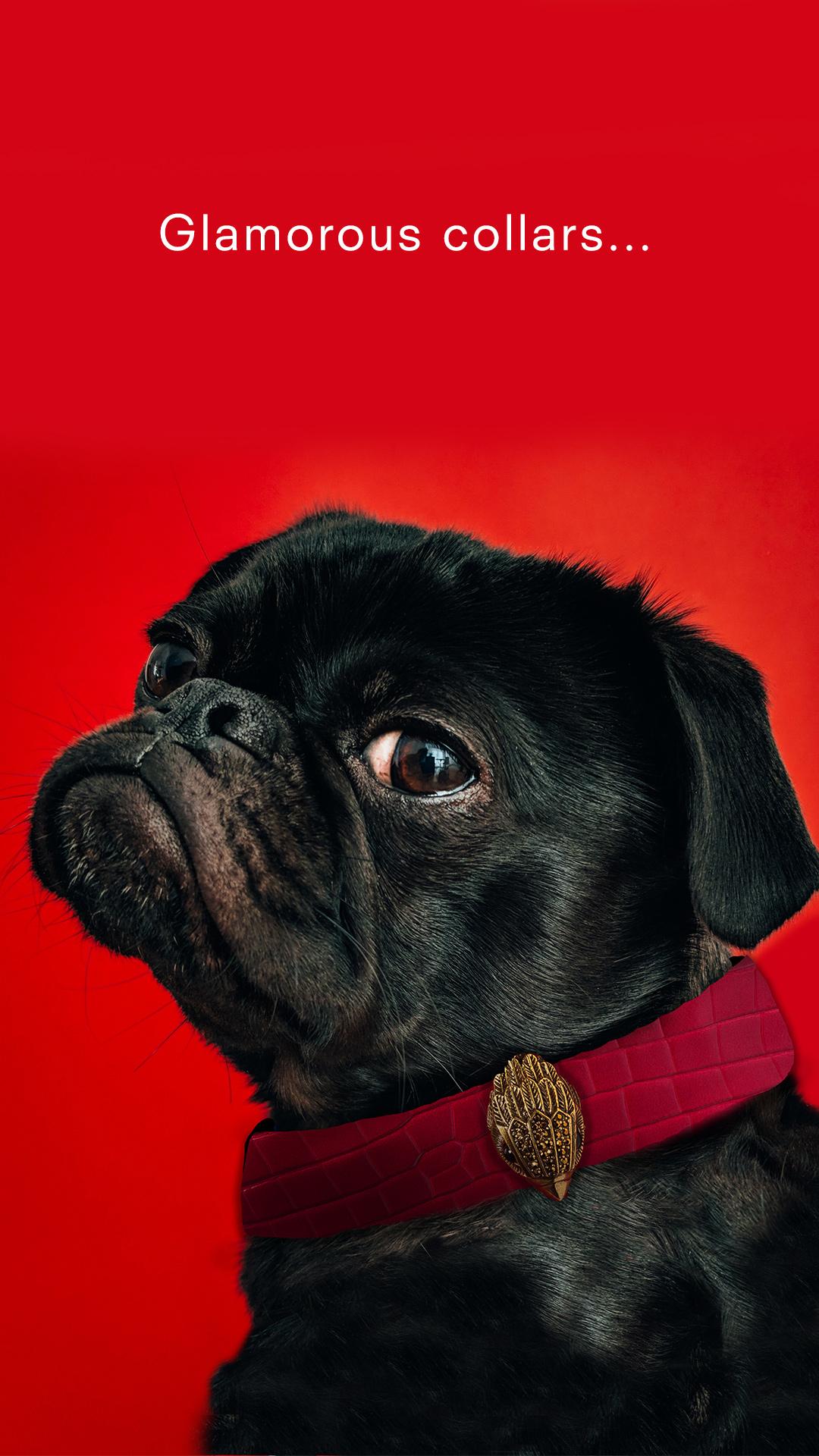 Collar-Dog.jpg