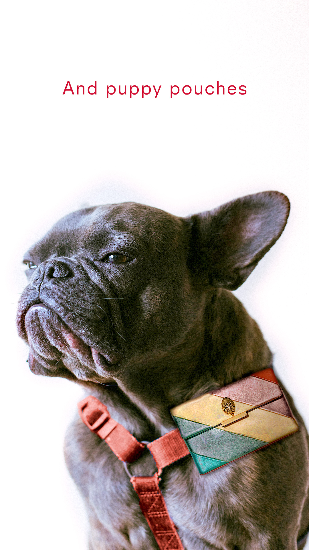 Pouches-Dog.jpg
