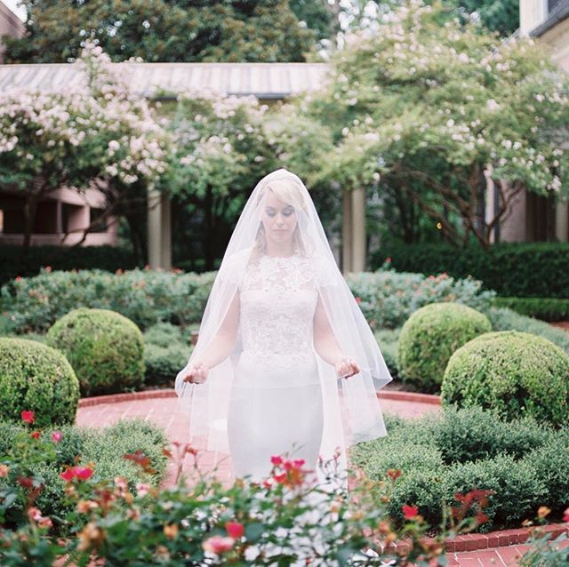 A picturesque bride wearing her gorgeous @ritavinieris gown amongst roses in the garden.