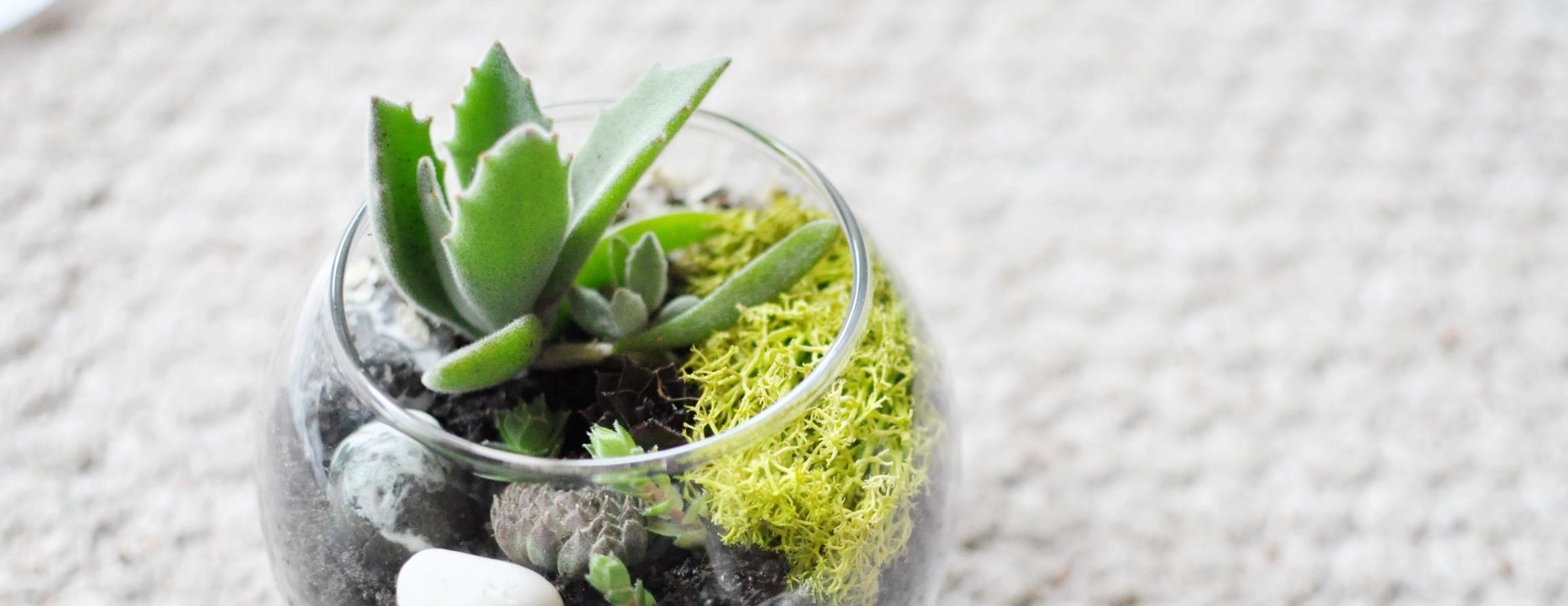 terrariums & other plants -