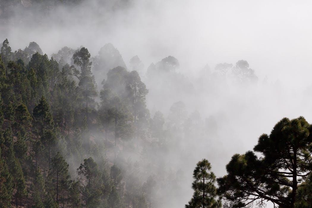 fog-outlines-pine-trees-40726.jpg