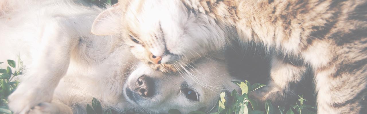 pet supplies donations -