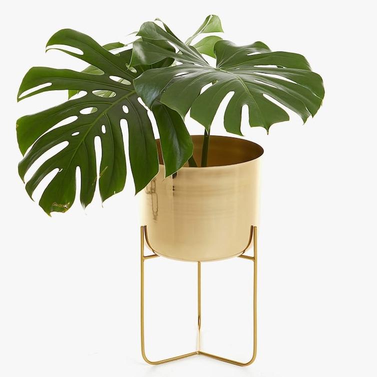 Gold Iron Planter, $119