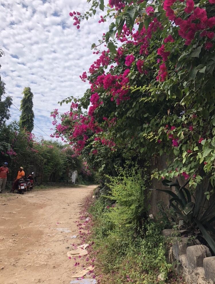 Flowering trees in Zanzibar, Tanzania  Photo provided by Stephaney Wilson '20