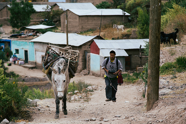 young village man with his donkey in peru
