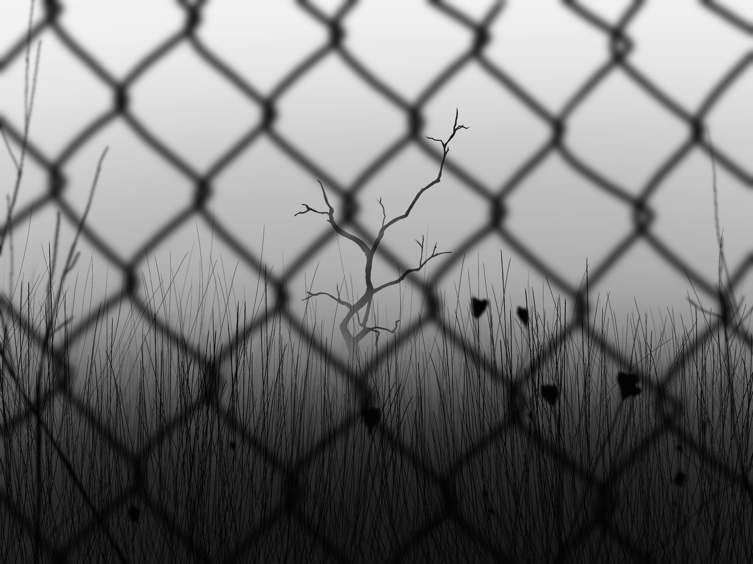 2-Fence.jpg