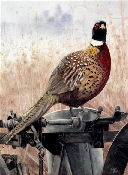 Iowa Ringneck - watercolor