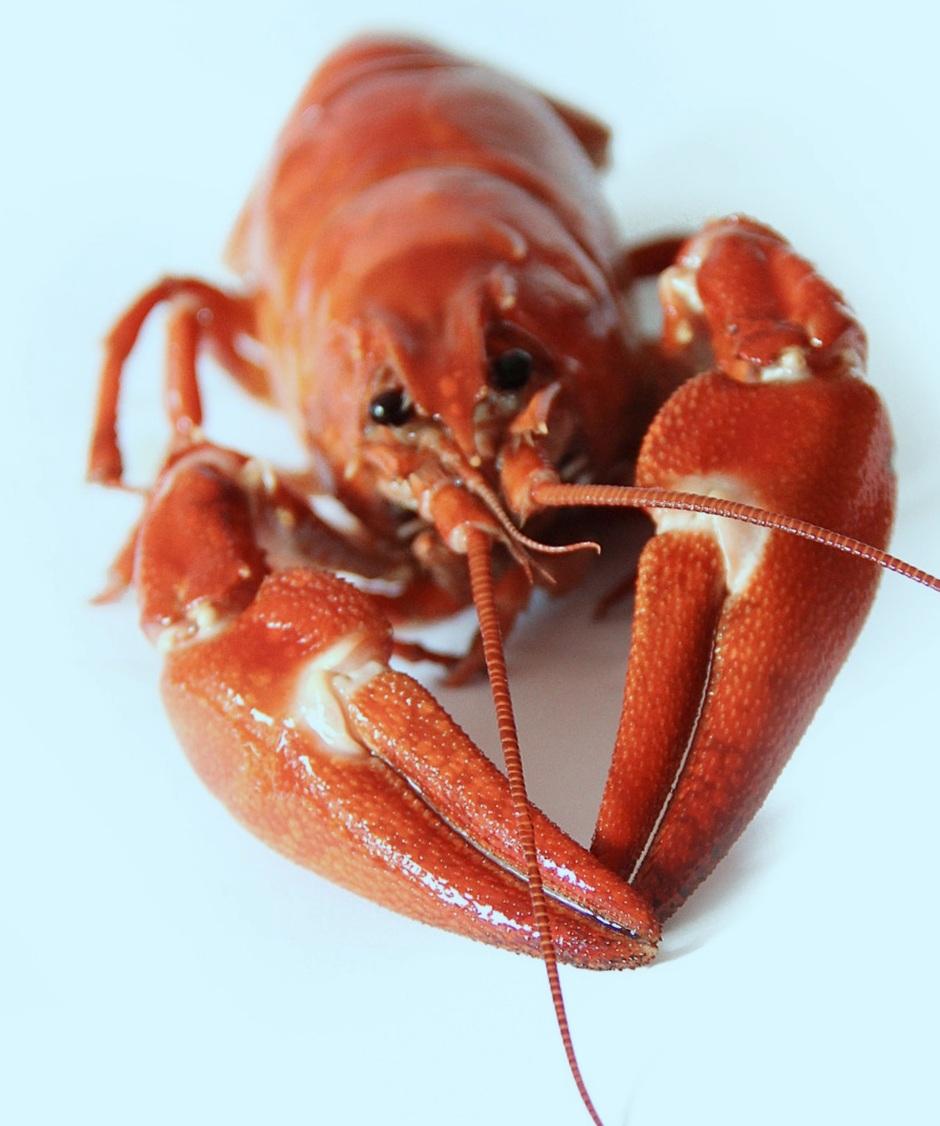 crayfish-crustacean-lobster-52998.jpg