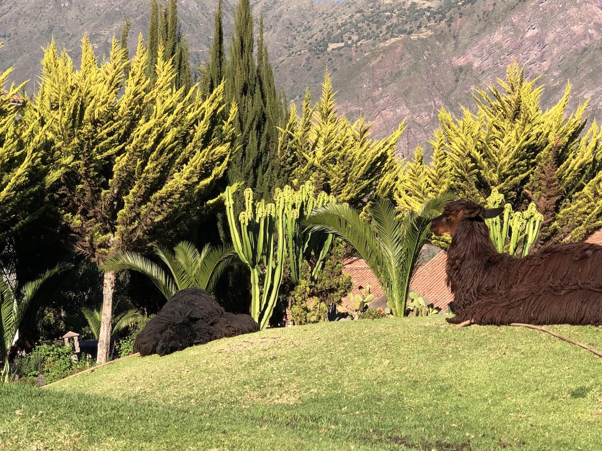 The First Principle Machu Picchu Post Expedition 22.jpg
