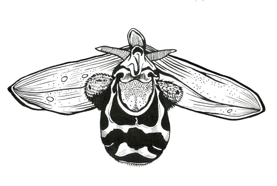 Orchid1 copy.jpg