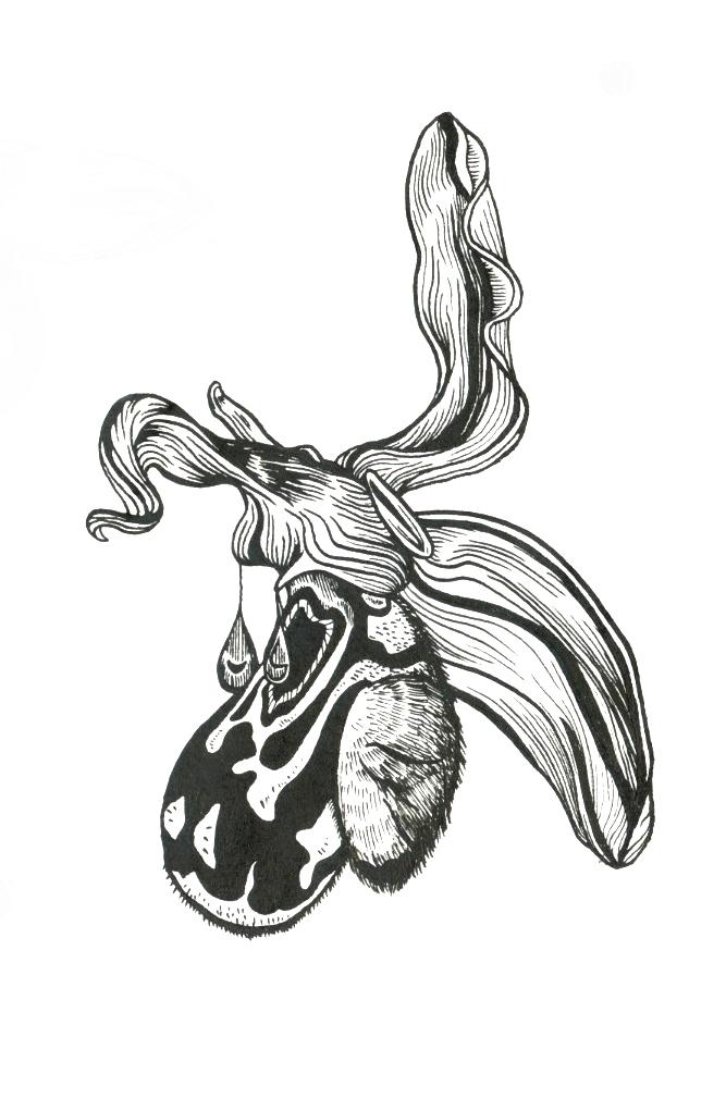 orchid2 copy.jpg