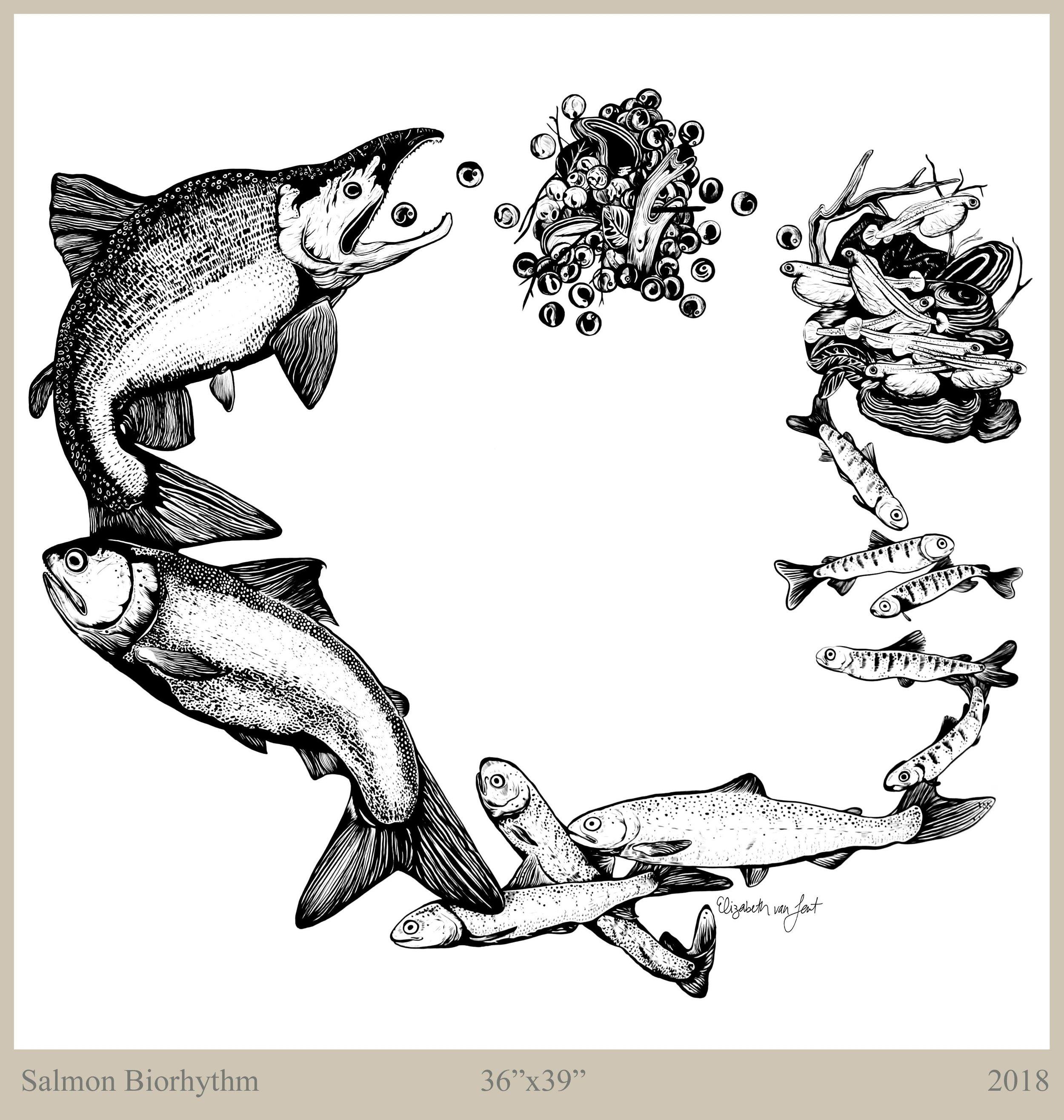 SalmonCycle_300_text-compressor.jpg