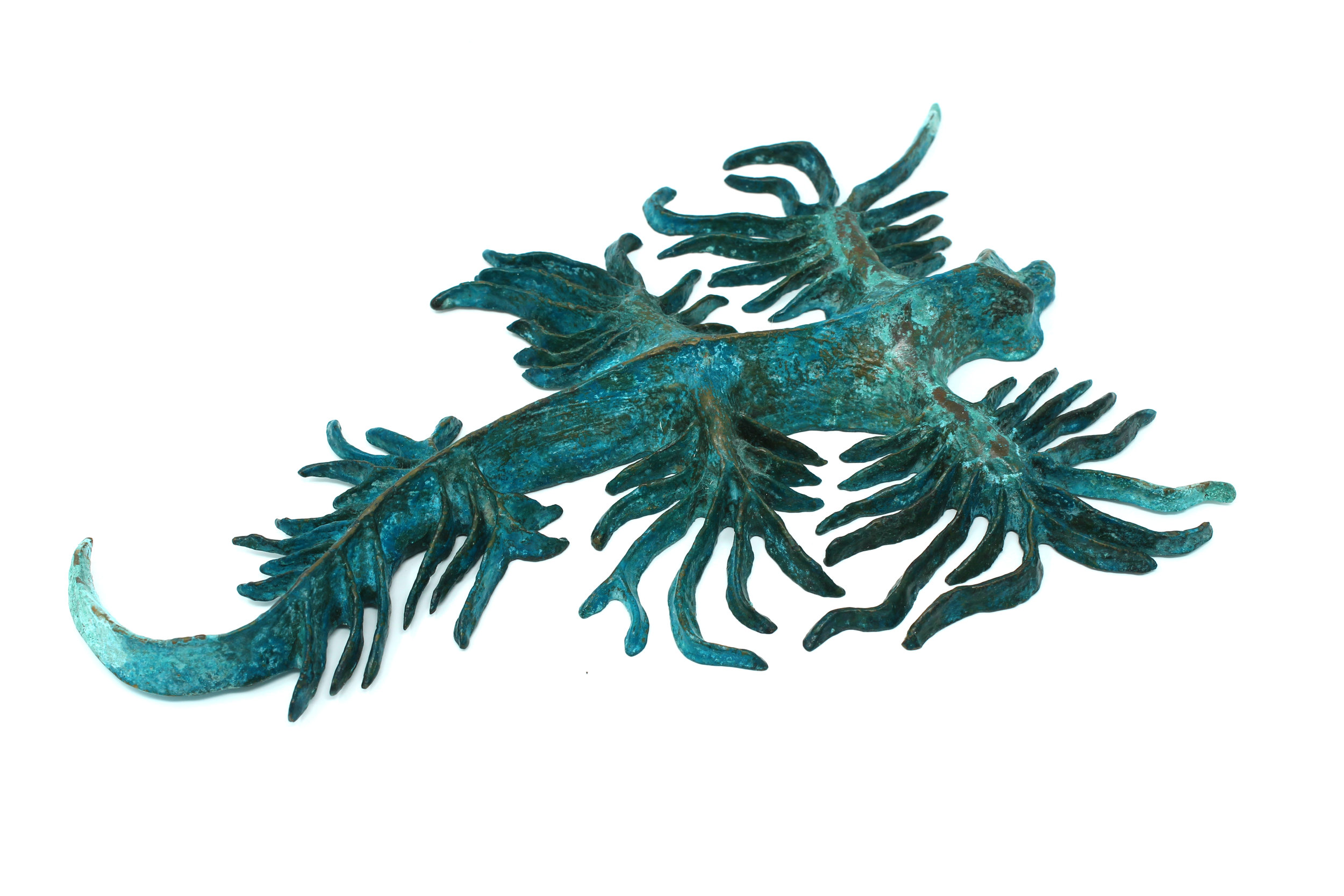 Nudibranch #1
