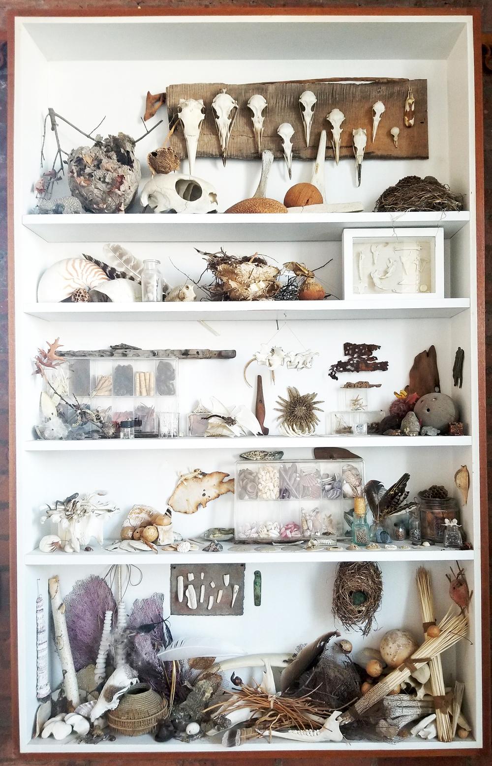 Curiosity Cabinet