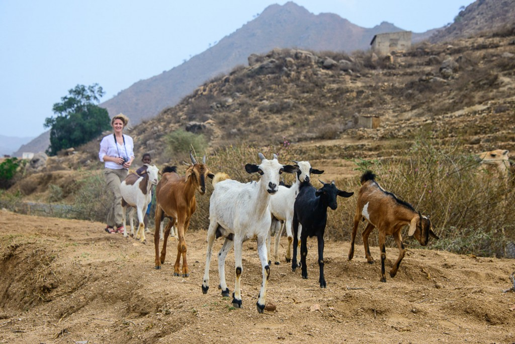 Samantha walking with goats in Eritrea