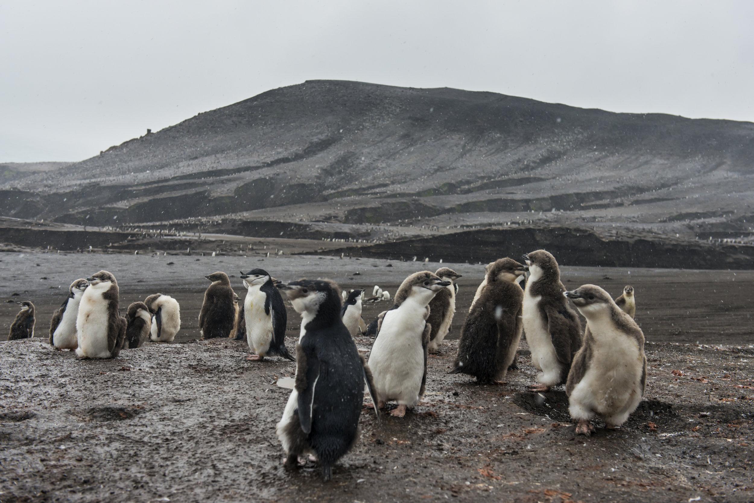 Saunders Island, Falkland Islands, Antarctica.