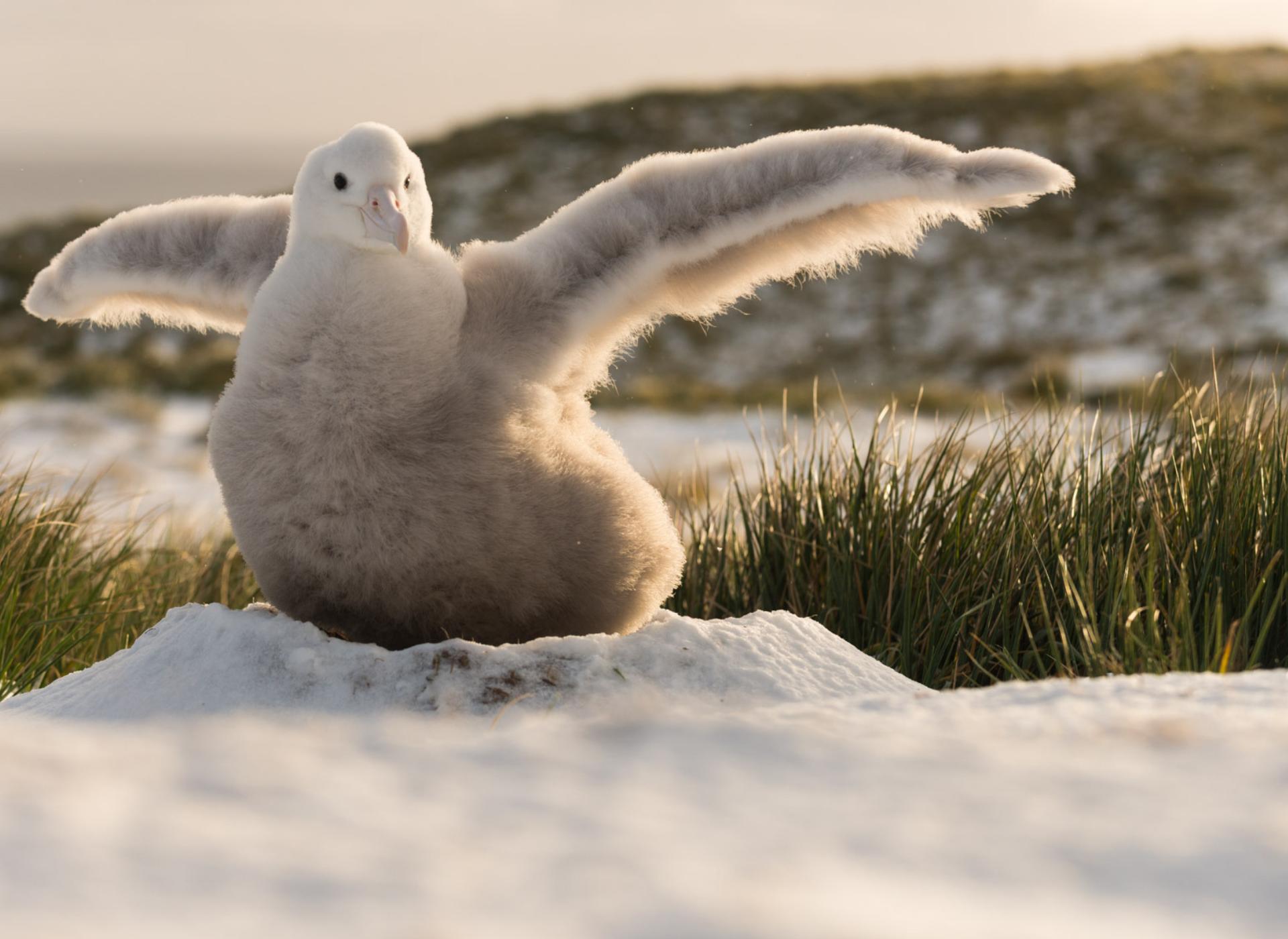 Albatross Stories -