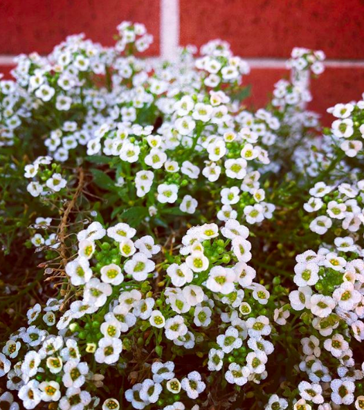 Small flowers wall
